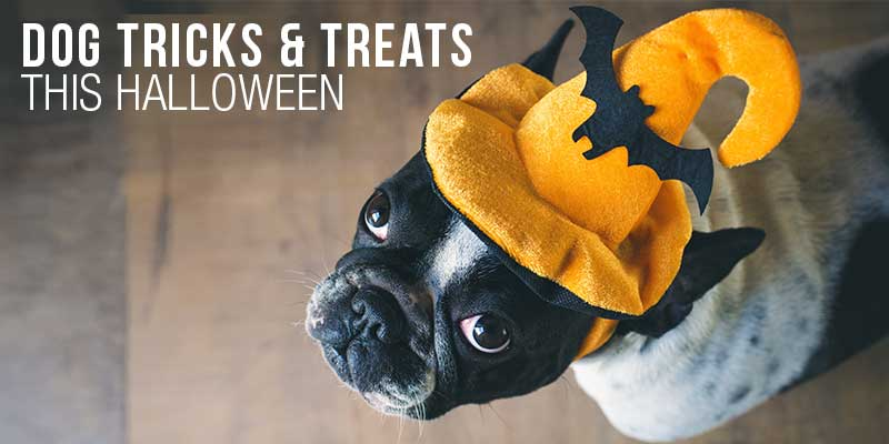 SitStay Blog Dog Tricks & Treats This Halloween