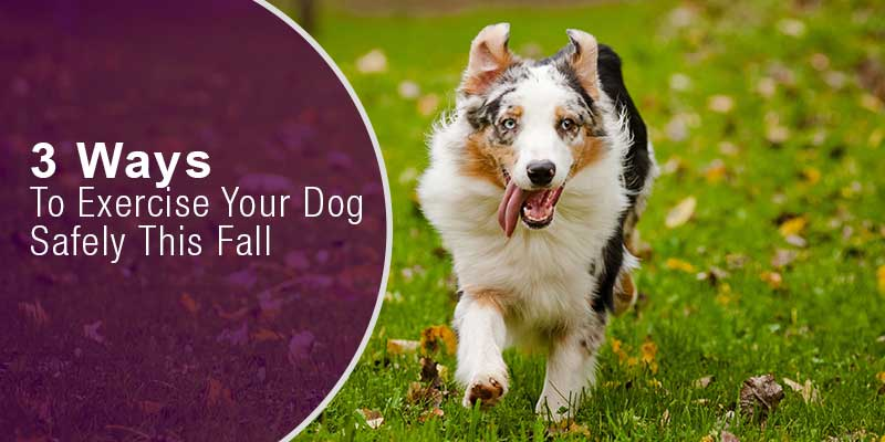 SitStay Blog: 3 Ways To Exercise Your Dog Safely This Fall