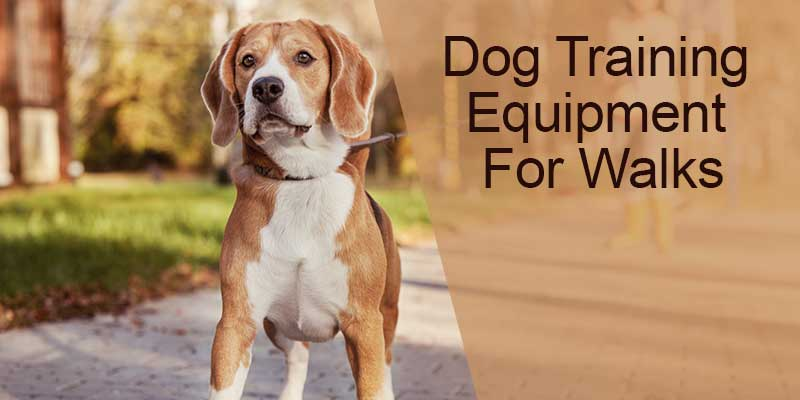 SitStay Blog Dog Training Equipment For Walks