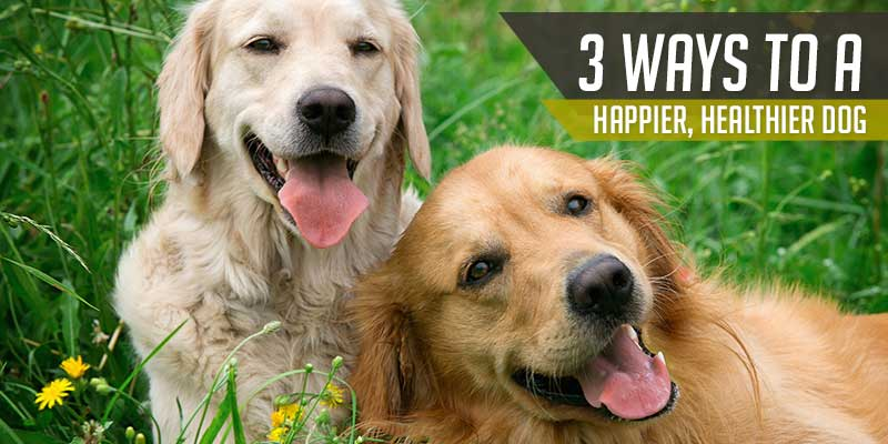 SitStay Blog 3 Ways To A Happier, Healthier Dog