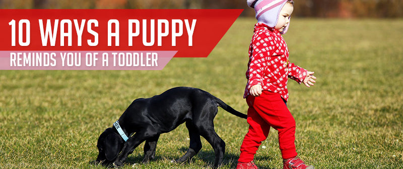 SitStay Blog 10 Ways A Puppy Reminds You Of A Toddler
