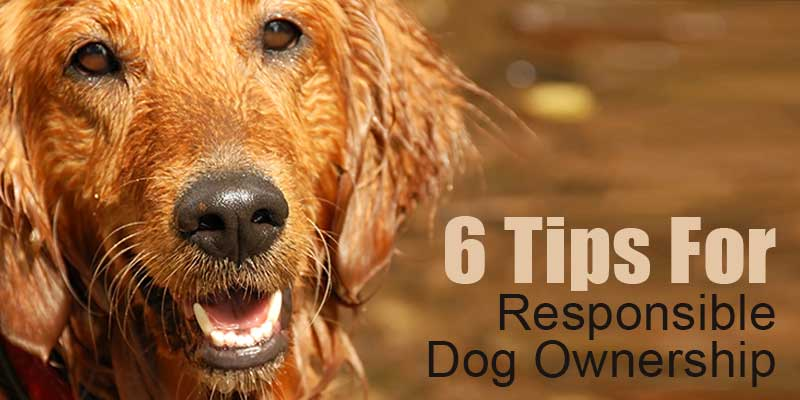 SitStay Blog: 6 Tips For Responsible Dog Ownership