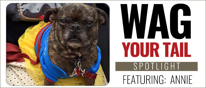 Wag Your Tail Spotlight - Annie