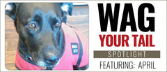 Wag Your Tail Spotlight - April