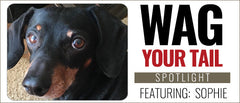 Wag Your Tail Spotlight - Sophie