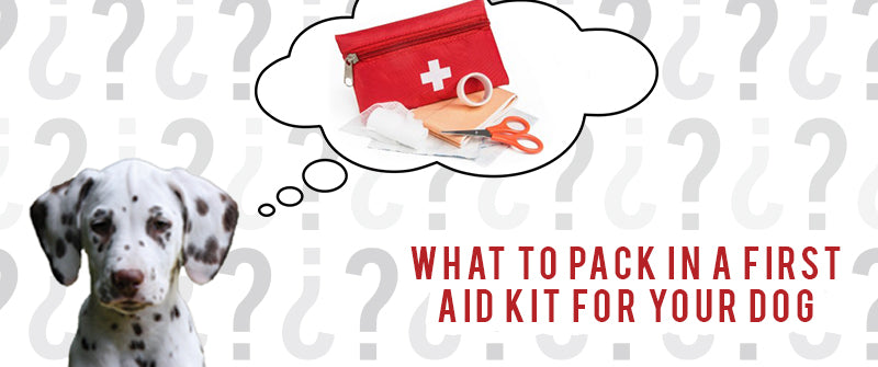 dalmatian puppy sitting with a thought bubble above his head showing a red first aid kid, with the text what to pack in a first aid kit for a dog displayed beneath the thought bubble. the background is repeating normal and upside-down question marks