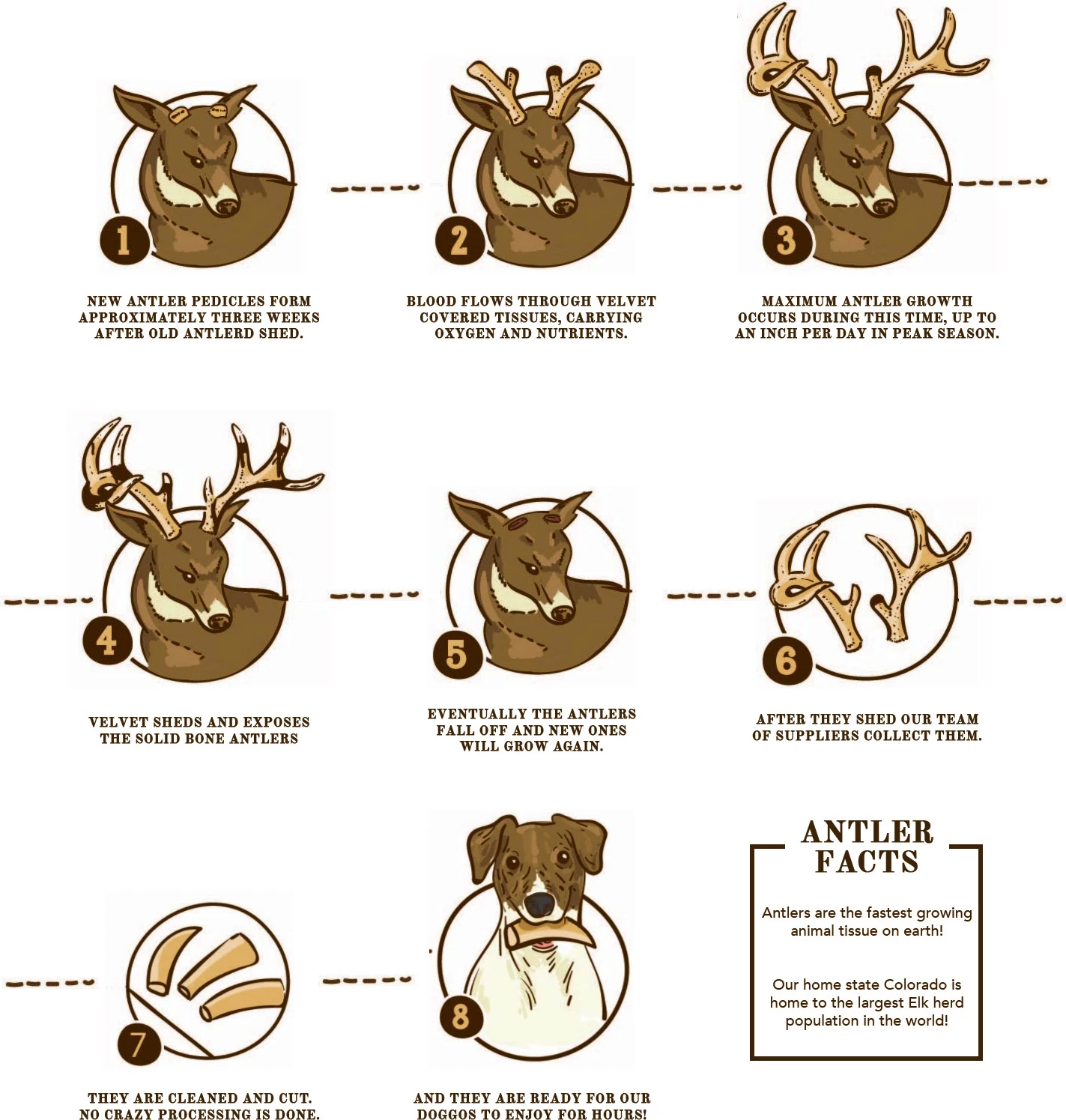 The Elk Antler Process