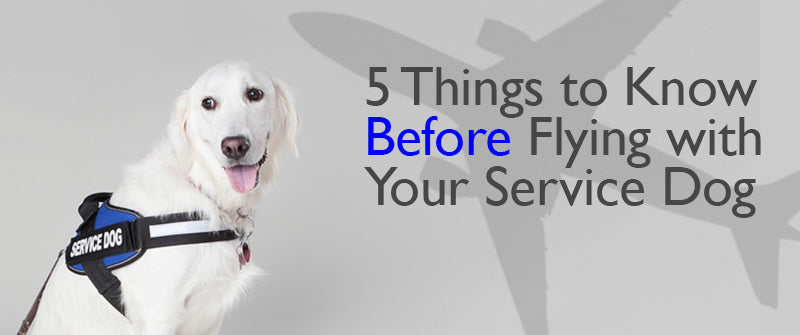 5 Things to Know before Flying with Your Service Dog
