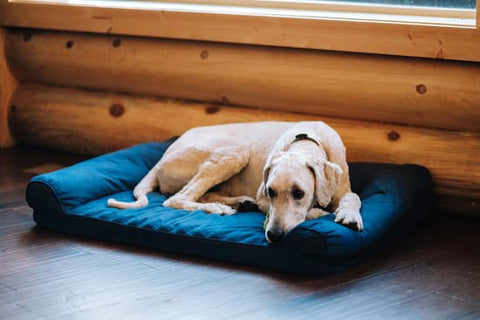 Goldendoodle laying on a dog bed in a cabin