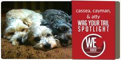 SitStay Wag Your Tail Spotlight - Featuring Cassea, Cayman, & Atty