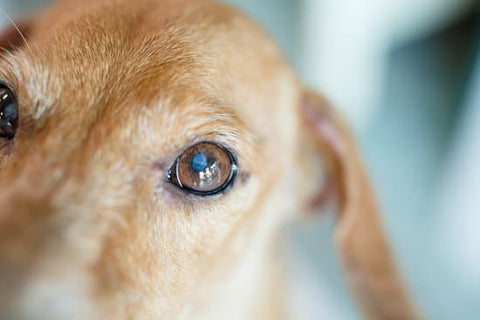 best organic cbd oil for dogs with cancer