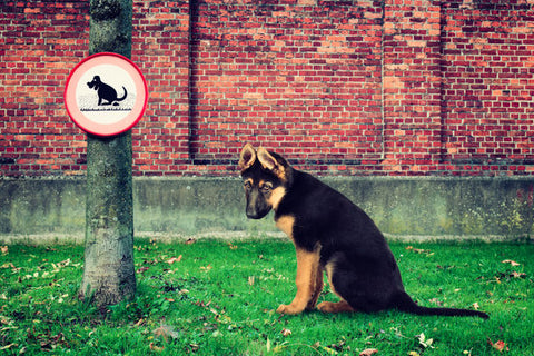 German Shepherd sitting in a dog poop zone next to a sign