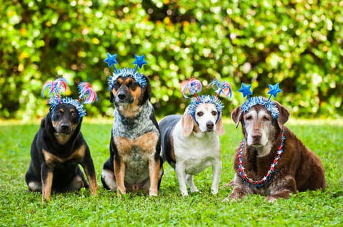 Group of older dogs wearing fourth of July costumes