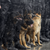 Two german shephards and one rottweiler sitting in front of police dressed in black while it is snowing