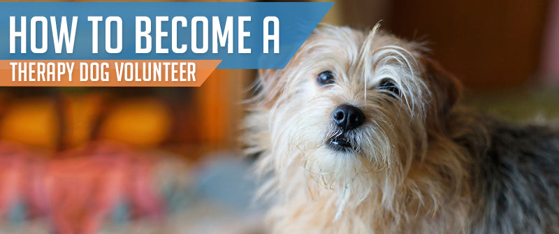 SitStay How To Become A Therapy Dog Volunteer