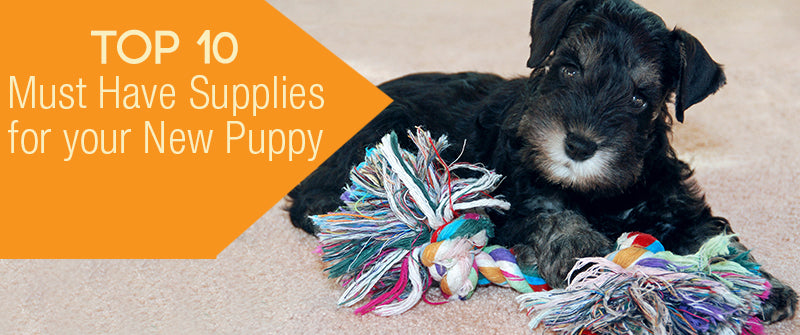 SitStay Top 10 Must Have Supplies For Your New Puppy