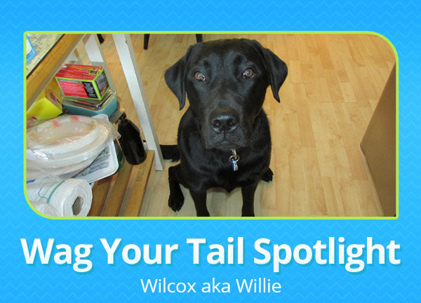 Wag Your Tail Spotlight