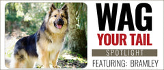 Wag Your Tail Spotlight Featuring Bramley