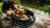 man washing brown curly haired dog on wood deck in doog pop up pool