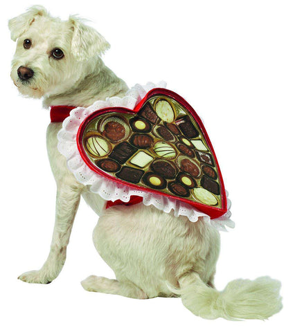 Rasta Imposta - Chocolate Box Dog Costume
