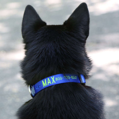 dogIDs Embroidered Nylon Dog Collar - SitStay - 2