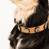 Beer Paws Leather Bottle Cap Studded Collar