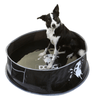 black and white dog sitting in doog pop up pool