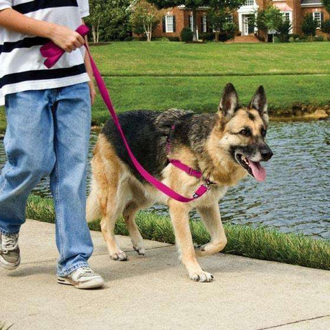 Petsafe Easy Walk Harness Small Fawn Brown For Dogs