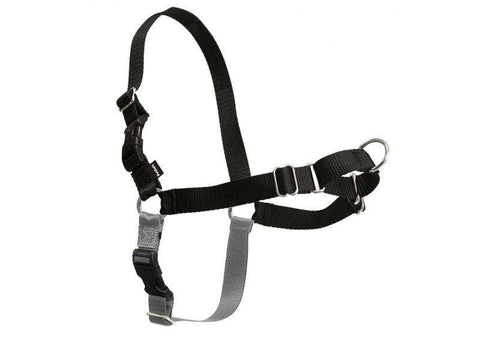 PetSafe Easy Walk Harness, Black/Silver (All Sizes) - SitStay - 1