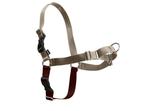 PetSafe Easy Walk Harness, Fawn/Brown (All Sizes) - SitStay - 1