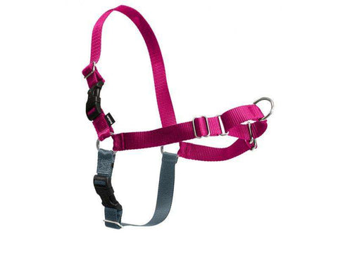 PetSafe Easy Walk Harness, Raspberry/Gray (All Sizes)