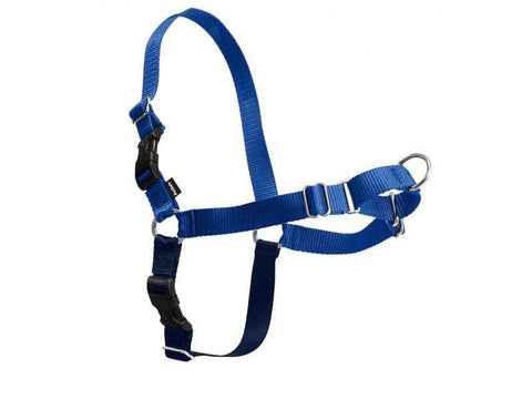 PetSafe Easy Walk Harness,  Royal Blue/Navy (All Sizes)