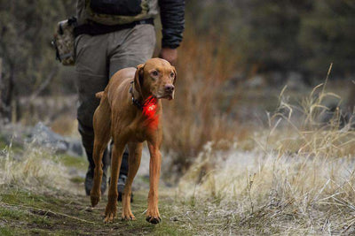 The Beacon Safety Light by RuffWear