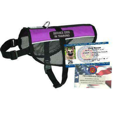 Service Dog In Training Starter Kit Sitstay