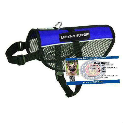 Image of: Spaniel Puppies Emotional Support Dog Mesh Vest Starter Kit Houston Chronicle Emotional Support Dog Mesh Vest Starter Kit Sitstay