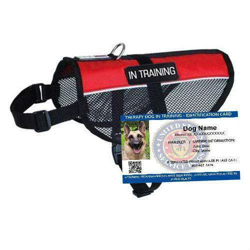 Therapy Dog In Training Mesh Vest Starter Kit