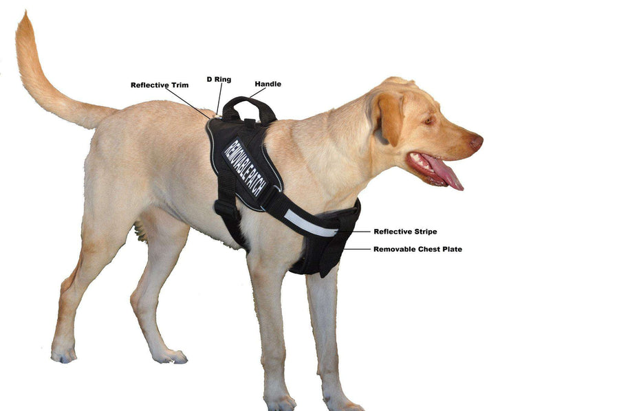 Clic Service Dog Vests for Sale | Therapy Dog Harnesses | Sit Stay
