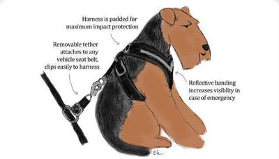 AllSafe Harness