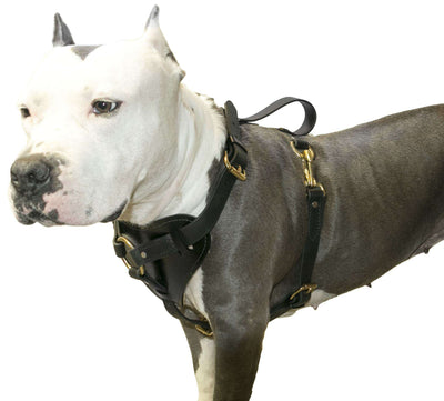 DOGLine Viper Surge Biothane Working Dog Harness - SitStay - 1