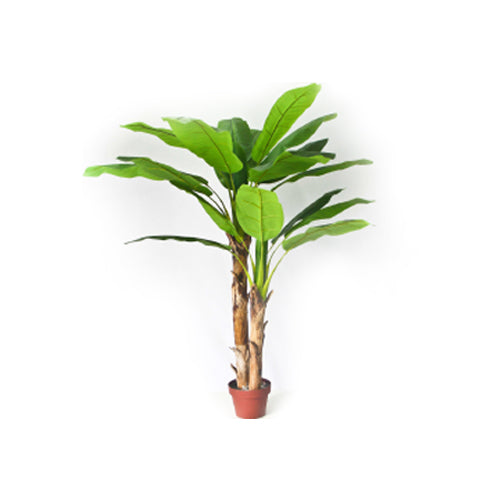 [SP] Plantain Tree 220