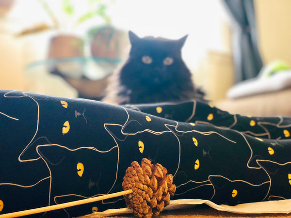 black cat halloween yoga waist buttery Soft Microfiber High Waist Fashion Patterned Celebrity Leggings for Women one size