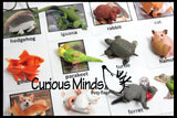 Animal Match - PETS - Miniature Animals with Matching Cards - 2 Part Cards.  Montessori learning toy, language materials - Pet Animals