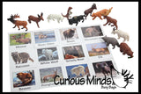 Animal Match - North American - Miniature Animals with Matching Cards - 2 Part Cards.  Montessori learning toy, language materials - North American Wildlife Animals