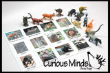 Montessori Animal Match - Miniature Animals with Matching Cards - 2 Part Cards.  Montessori learning toy, language materials - Rainforest Animals - South America