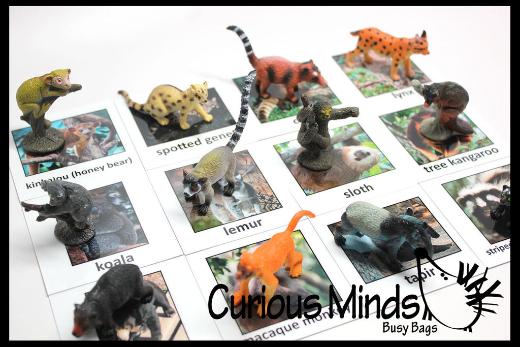 Animal Match - RAINFOREST - Miniature Animals with Matching Cards - 2 Part Cards.  Montessori learning toy, language materials - Rainforest Animals - South America