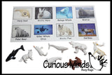 Montessori Animal Match - Miniature Animals with Matching Cards - 2 Part Cards.  Montessori learning toy, language materials - Arctic Animals