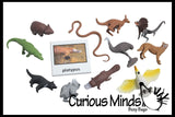 Animal Match - AUSTRALIAN - Miniature Animals with Matching Cards - 2 Part Cards.  Montessori learning toy, language materials - Australian Animals