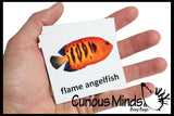 Animal Match - TROPICAL FISH - Miniature Animals with Matching Cards - 2 Part Cards.  Montessori learning toy, language materials - Tropical Fish