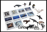 Animal Match - ANTARCTICA - Miniature Animals with Matching Cards - 2 Part Cards.  Montessori learning toy, language materials - Antarctic Animals