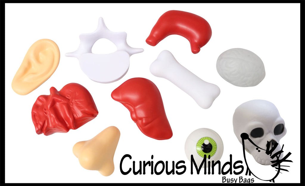 Body Parts Stress Balls - Office, Doctor, Med Student Anatomy